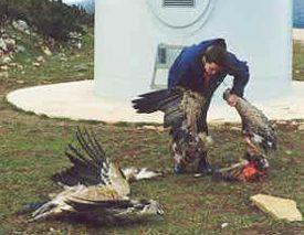 dead birds by turbine